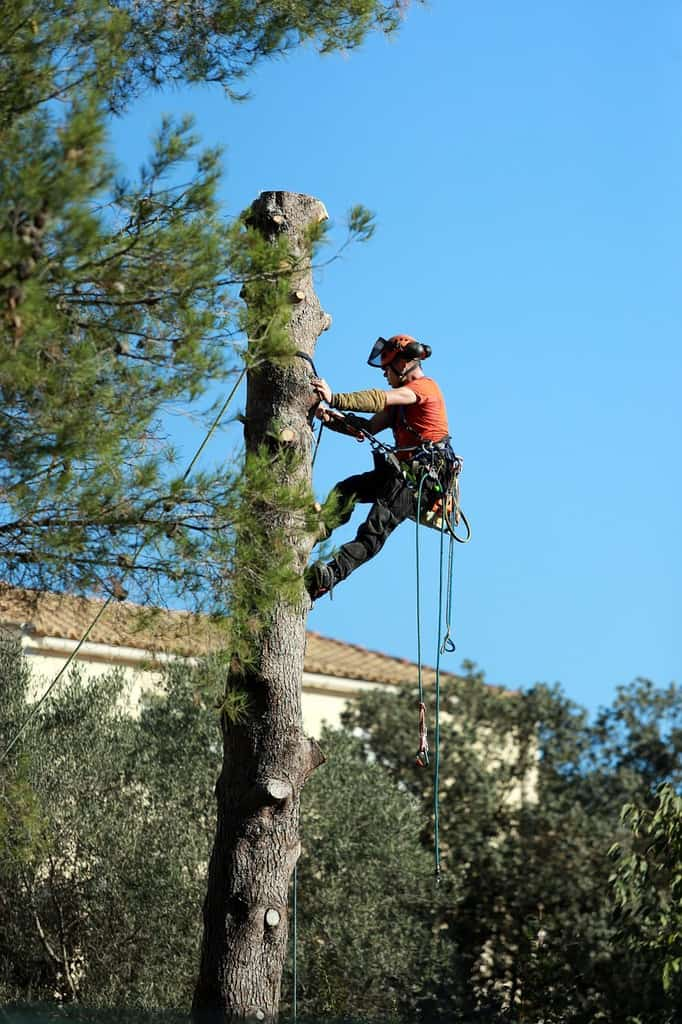 Savannah Tree Removal