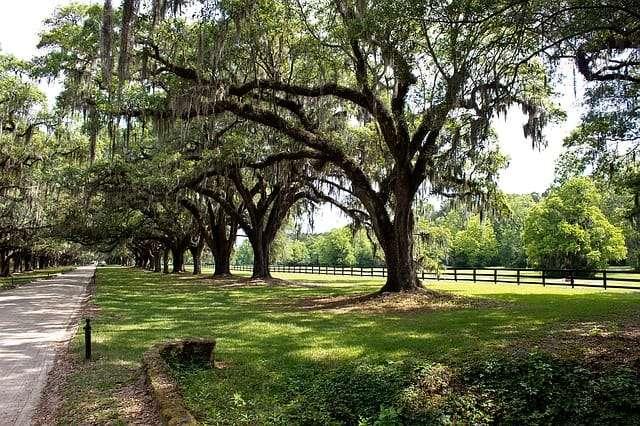 tree cabling savannah